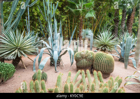 MARRAKECH, MOROCCO - FEBRUARY 22, 2016: The Majorelle Garden is a botanical garden and artist's landscape garden - Stock Photo