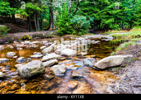 Red creek in Dolly Sods, West Virginia during autumn, fall with green pine tree forest and smooth water river, fallen - Stock Photo