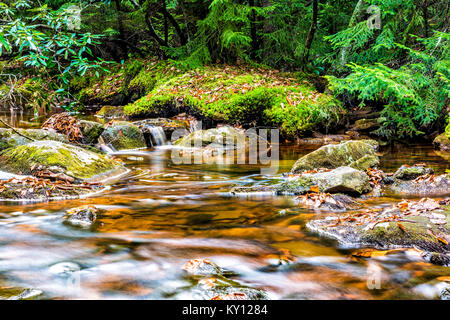 Red creek in Dolly Sods, West Virginia during autumn, fall with green pine tree forest and smooth water river, waterfall - Stock Photo
