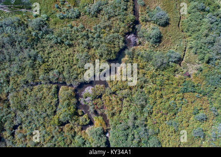 Stream flowing through the green forest - Stock Photo
