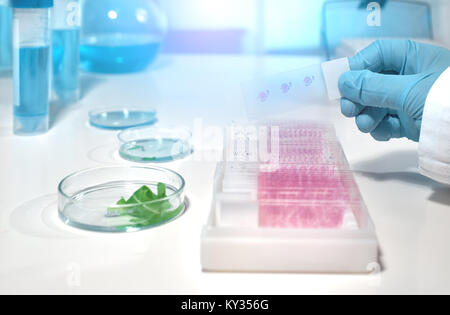 Scientific background with microscope room and microscopic slide in gloved hand. Shallow DOF,toned image, focus - Stock Photo