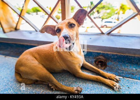 Homeless Tired small dog lying and sleeping at handrail in Caribbean airport. - Stock Photo