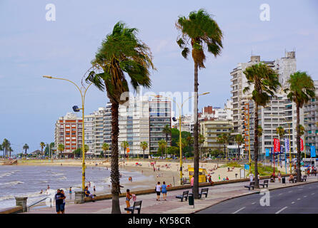 High rise buildings along Playa Pocitos in Montevideo, Uruguay. - Stock Photo