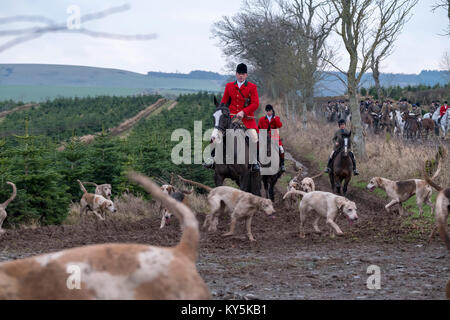 Ancrum, Rawflat /, UK. 13th January, 2018. Buccleuch Foxhounds at Rawflat, near Ancrum Caption: Huntsman Tim Allen - Stock Photo