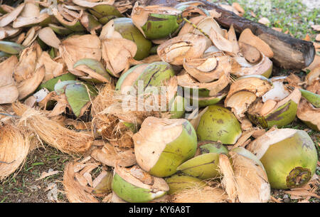 Pile of fresh cut coconut shells on ground in New Caledonia - Stock Photo