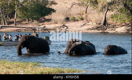 Elephants Crossing River - Stock Photo