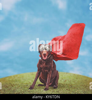a chocolate labrador retriever in a super hero costume posing for the camera during a hot summer day with goggles - Stock Photo
