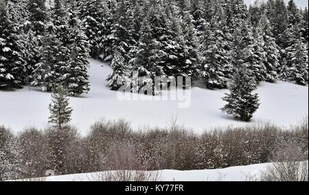 Snowy slopes in the hills outside of 100 Mile House, BC, Canada. Taken on January 12, 2018 at 3:45 PM. - Stock Photo