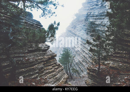 Rocks in foggy Forest Landscape scenic view Travel serene scenery rainy day - Stock Photo