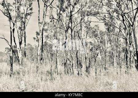 Farmland and bush near Clairview, eucalyptus dominated dry sclerophyll forest in black and white, Clairview, Queensland, - Stock Photo
