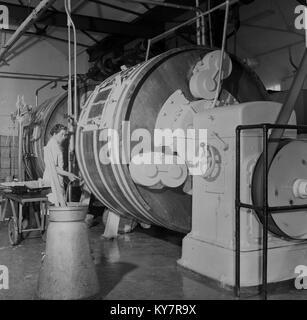 1950s, historical, female dairy worker in white coat checking a pipe connected to a large barrel-type mechanical - Stock Photo