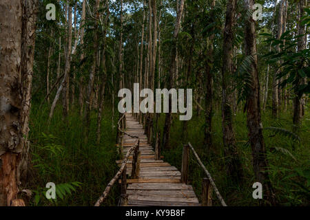 A wooden rasied walkway leading the way through a dence forrest. - Stock Photo