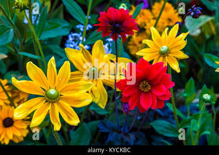 Multicolored summer flowers in Victoria known as the Garden City on Vancouver Island in British Columbia, Canada - Stock Photo