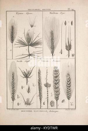 Tableau encyclopédique et méthodique des trois règnes de la nature (12459096665) - Stock Photo