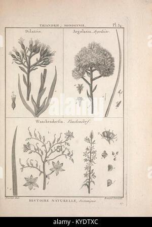 Tableau encyclopédique et méthodique des trois règnes de la nature (12459200693) - Stock Photo