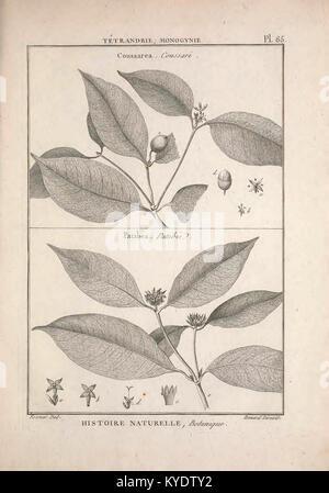 Tableau encyclopédique et méthodique des trois règnes de la nature (12459354383) - Stock Photo