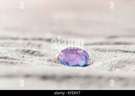 Sunlight shines through beautiful pink and purple shell on sandy beach - Stock Photo