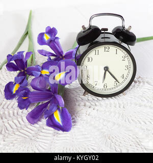 Violet Irises xiphium (Bulbous iris, sibirica) with clock on white background with space for text. Top view, flat - Stock Photo