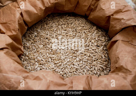 Sunflowers seeds. Fresh organic peeled sunflower seeds in a sack for storage. Sunflower Oil. - Stock Photo