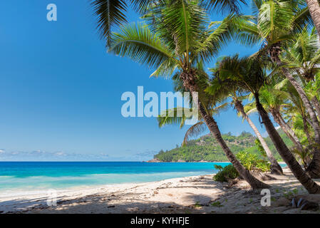 View of nice tropical beach with palms around. - Stock Photo
