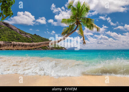 Tropical sandy beach with palm tree. - Stock Photo