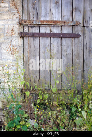 Old weathered rusty hinged stable door entrance blocked with weeds - Stock Photo
