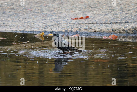 Birds natural pool - Stock Photo