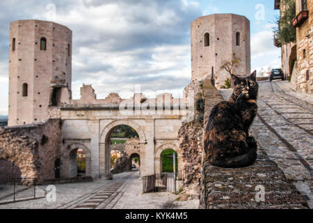Spello, Perugia, Umbria. Umbria the green heart of Italy.  A beautiful cat guards the magnificent Towers of Properzio, - Stock Photo