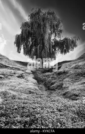 abstract high contrasted black and white vertical landscape with single tree - Stock Photo