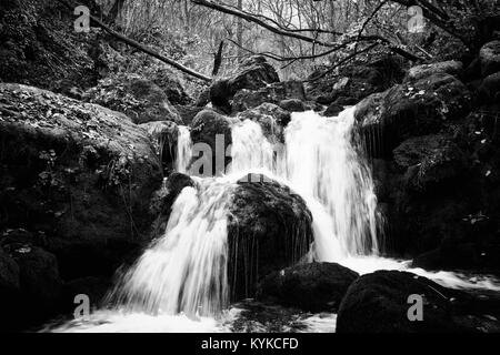 high contrasted black and white forest river landscape - Stock Photo