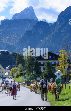 Schönau am Königssee: ceremonial driving down of cattle from the mountain pastures into the valley in autumn, decorated - Stock Photo