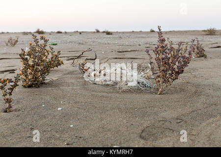 Pieces of fishing net between two bushes in sand on beach with grey sky on background.Beach and sea pollution concept. - Stock Photo