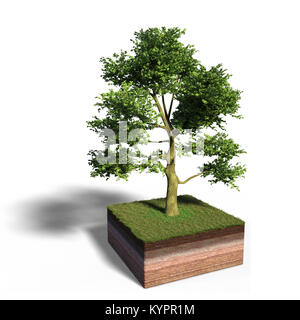 model of a cross section of ground with white ash tree tree and grass on the surface (3d illustration, isolated - Stock Photo