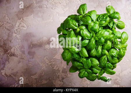 Large green aromatic Mediterranean basil leaves on rustic stone background with place for text. Aromatic spice. - Stock Photo