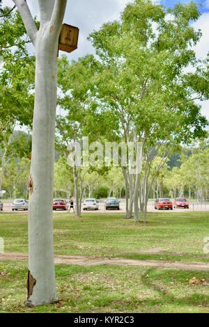 Nest boxes and wildlife habitats attached to gum trees at James Cook University, Townsville, Queensland, Australia - Stock Photo