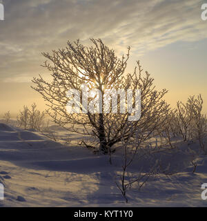 Sunshine through a small tree in the witer landscape. - Stock Photo