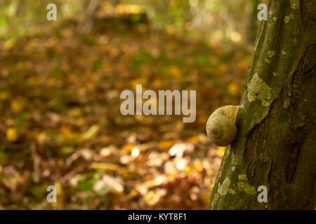 slug on a tree - Stock Photo