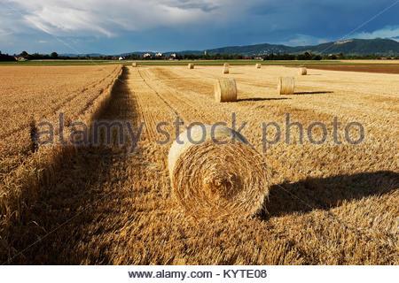 Hay rolls on harvested field in Friedrichsfeld Süd, Mannheim, Baden-Württemberg, Germany, Europe - Stock Photo