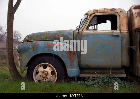 An old Chevy truck has been sitting in one spot for so long that a tree trunk has grown around it. - Stock Photo