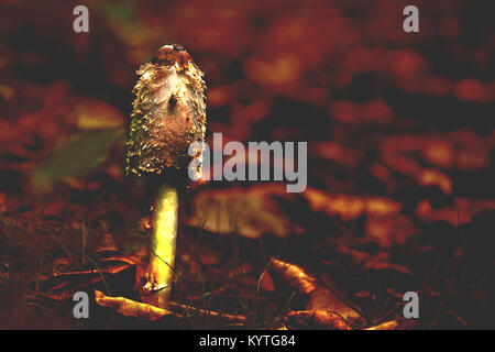 Fungi on forest floor in autumn,nature abstract,woodland near Westport lake,Stoke on Trent,Staffordshire,United - Stock Photo