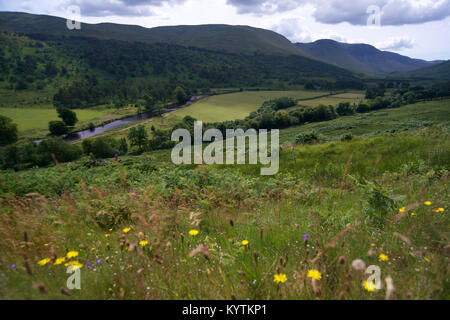 View of Glen Lyon in the summer with wildflowers in foreground. - Stock Photo