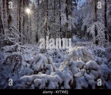 DE - BAVARIA: Sunshine in the forest near Bad Toelz, Bavaria  (HDR Image) - Stock Photo