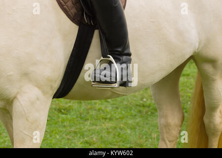 Close up of leather riding boots in stirrups on a cremello coloured thoroughbred horse - Stock Photo