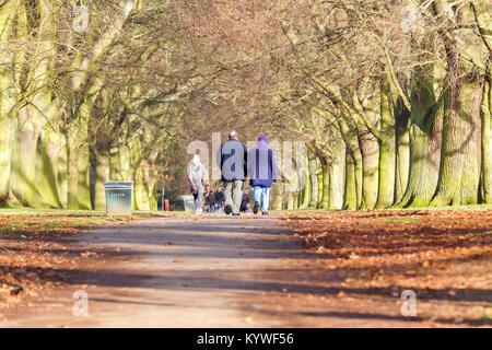 Northampton. U.K. Weather, Abington park. 16th January 2018. A older couple enjoy a stroll down the avenue of trees - Stock Photo