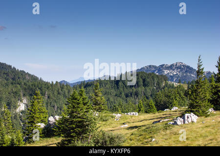 Zavizan mountains and pine forest - Northern Velebit National Park, Croatia -  Aug 2016 - Stock Photo
