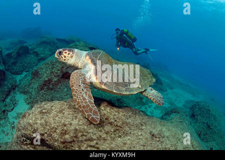 Scuba diver and Loggerhead seaturtle (Caretta caretta), Kas, ancient Lycia, Turkey, Mediteranean sea, Europe - Stock Photo