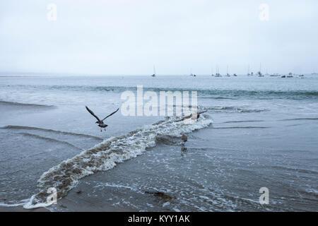 Birds flying over sea against clear sky - Stock Photo