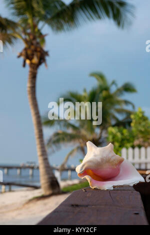 Seashell on wooden bench at beach against sky - Stock Photo