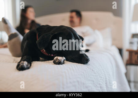 Close-up of dog lying on bed with couple in background - Stock Photo