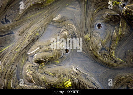 Congealed oil on water in yellow and black creating an abstract organic pollution based design. Copy space area - Stock Photo